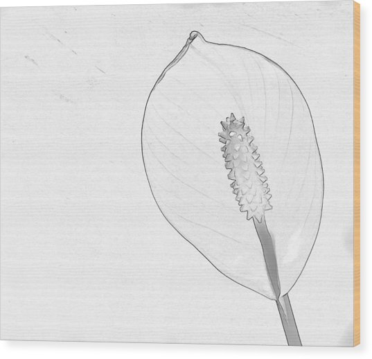 Tuscan Lily 3 Wood Print by Michael Taggart II