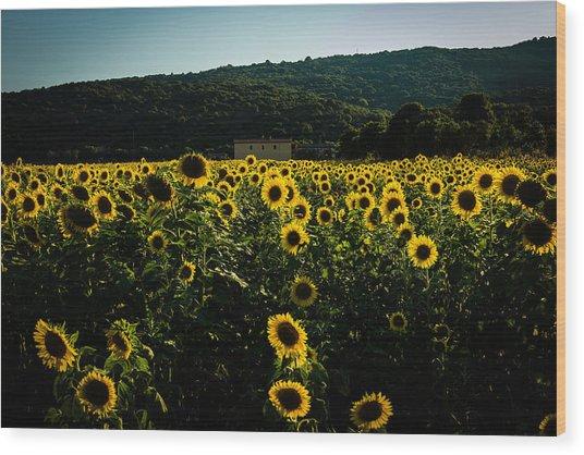 Tuscany - Sunflowers At Sunset Wood Print