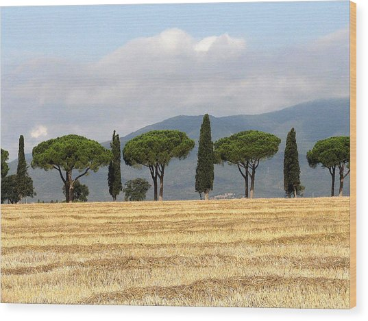 Wood Print featuring the digital art Tuscany Trees by Julian Perry
