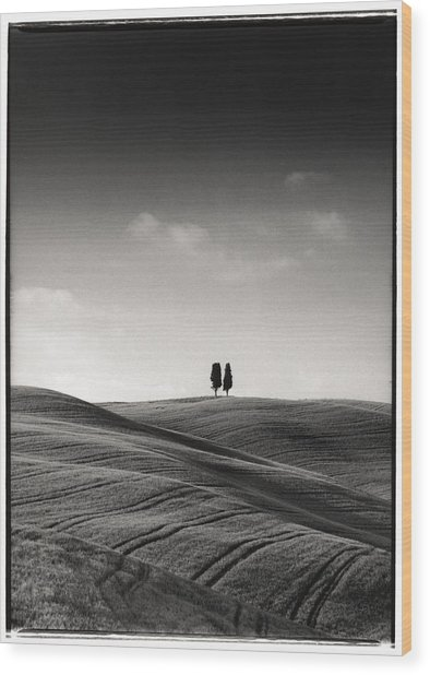 Tuscany Twin Cypresses Wood Print by Michael Hudson