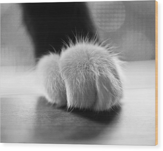 Tuxedo Cat Paw Black And White Wood Print
