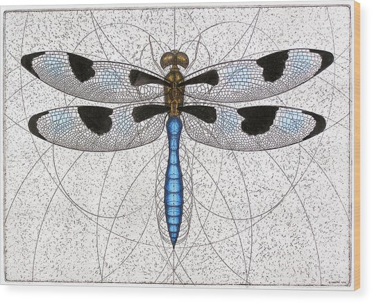 Twelve Spotted Skimmer Wood Print