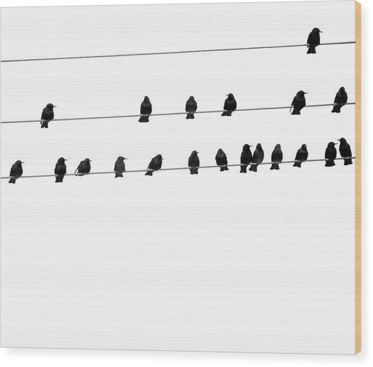 Twenty Blackbirds Wood Print