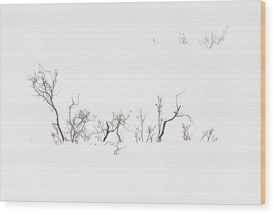 Twigs In Snow Wood Print