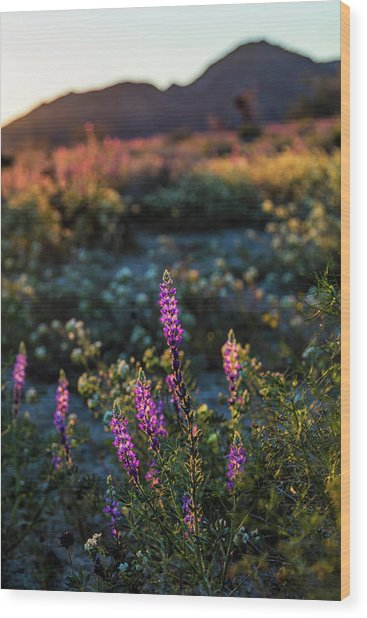 Twilight Lupine Wood Print