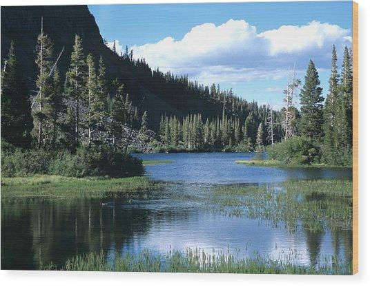 Twin Lakes And Ducks Feeding Wood Print