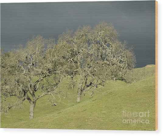 Twin Oaks Wood Print