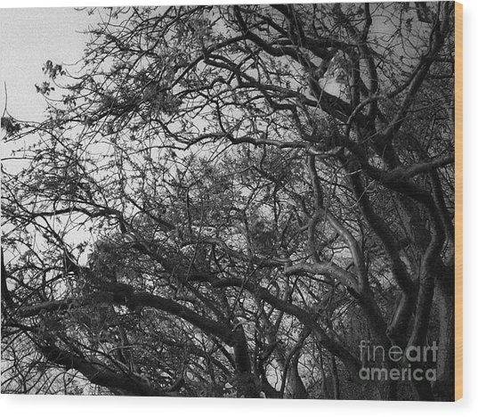 Twirling Branches Wood Print