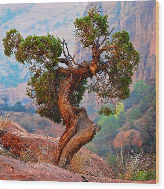 Twisted, Cedar Pine, Zion National Park, Utah Wood Print