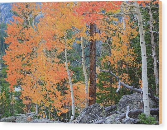 Twisted Pine Wood Print