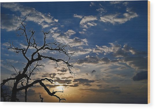 Twisted Sunset Wood Print by Karl Manteuffel