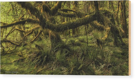 Twisted  Wood Print by T-S Fine Art Landscape Photography