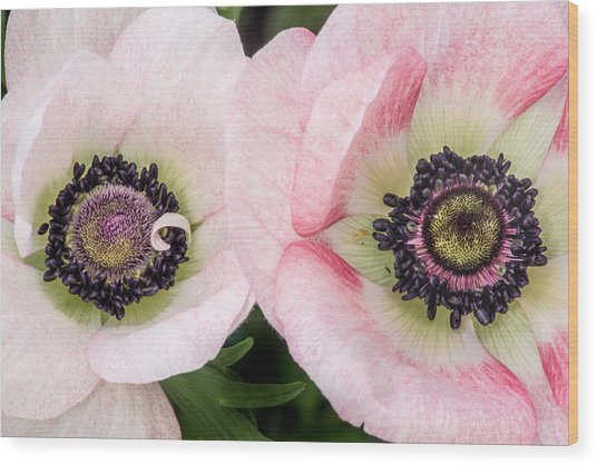 Two Anemones Wood Print