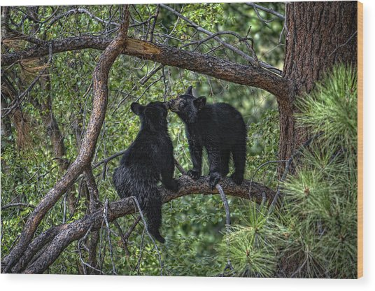Two Bear Cubs Kissing Up A Tree Wood Print by Paul W Sharpe Aka Wizard of Wonders