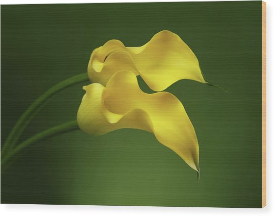 Two Calla Lily Flowers On Green Background Wood Print