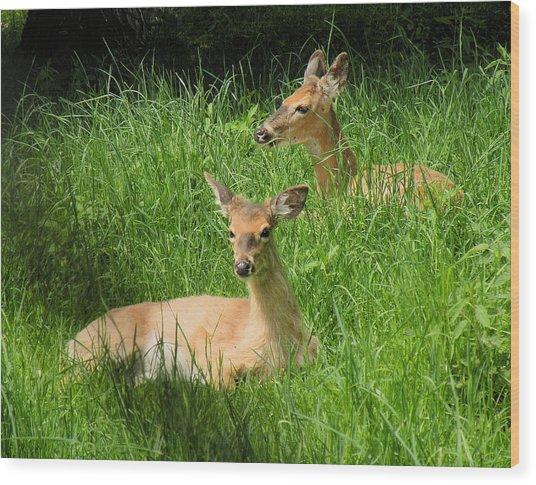 Two Deer In Tall Grass Wood Print by Rosalie Scanlon