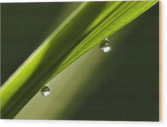 Two Dew Drops On A Blade Of Grass Wood Print by Michael Whitaker