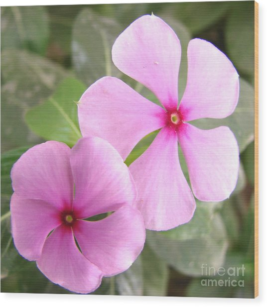 Two Flowers- Rosy Periwinkle Wood Print by Shariq Khan