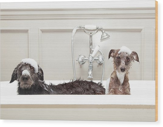Two Funny Wet Dogs In Bathtub Wood Print