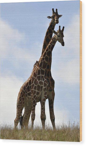 Two Giraffes A Love Story Wood Print
