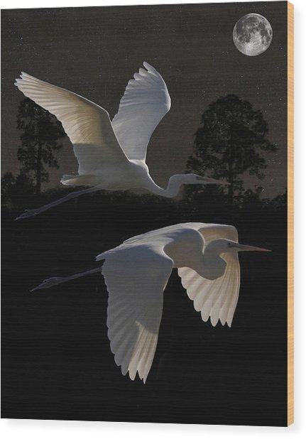 Two Great Egrets In Flight Wood Print