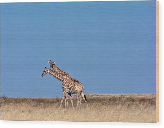 Wood Print featuring the photograph Two Heads Are Better Than One by Rand