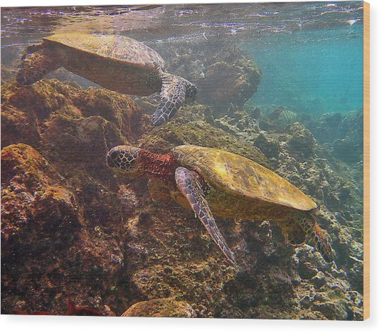 Two Honu On The Reef Wood Print