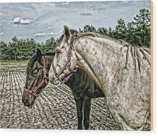 Two Horses In A Field Wood Print