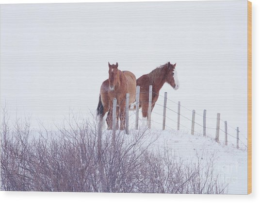 Two Horses In The Snow Wood Print