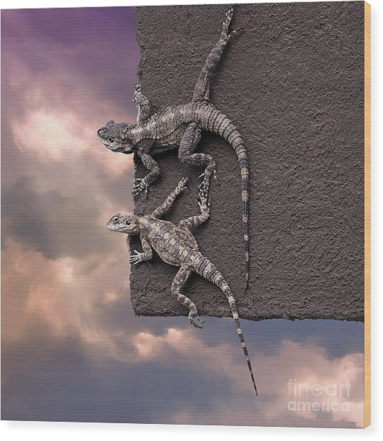 Two Lizards On The Edge Of The Roof Wood Print