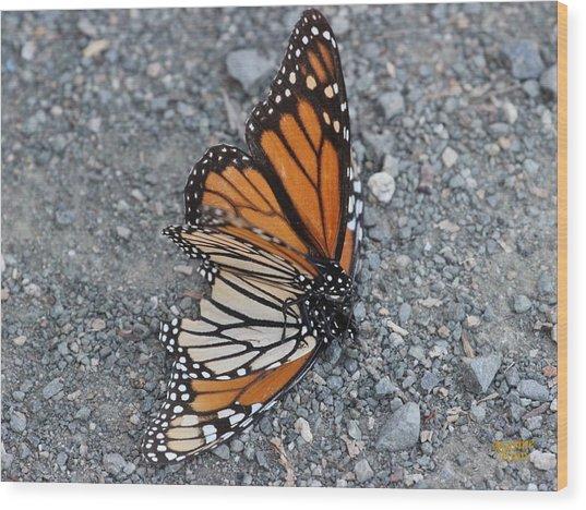 Two Monarchs Aflutter Wood Print