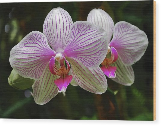 Two Orchids Wood Print