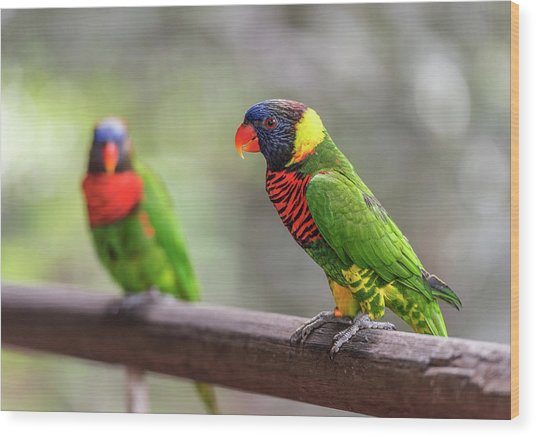 Wood Print featuring the photograph Two Parrots by Pradeep Raja Prints