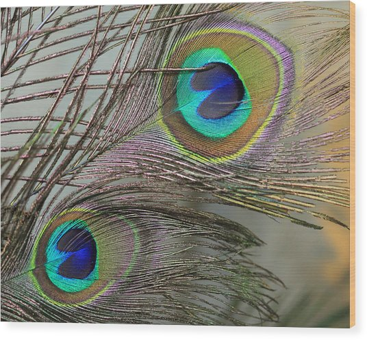 Two Peacock Feathers Wood Print