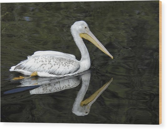 Two Pelicans Wood Print