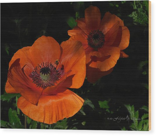 Two Poppies  And A Bee Wood Print