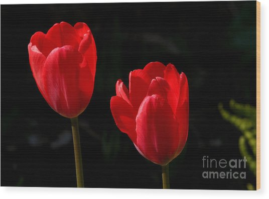 Two Red Tulips Wood Print