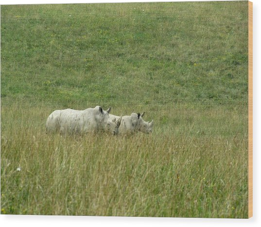 Two Rhino In The Grass Wood Print by George Jones
