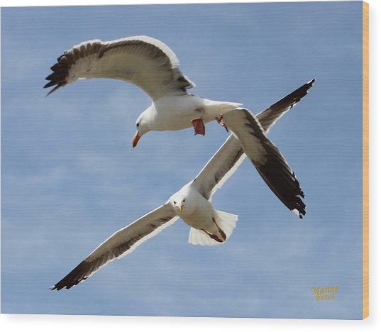 Two Seagulls Almost Collide  Wood Print