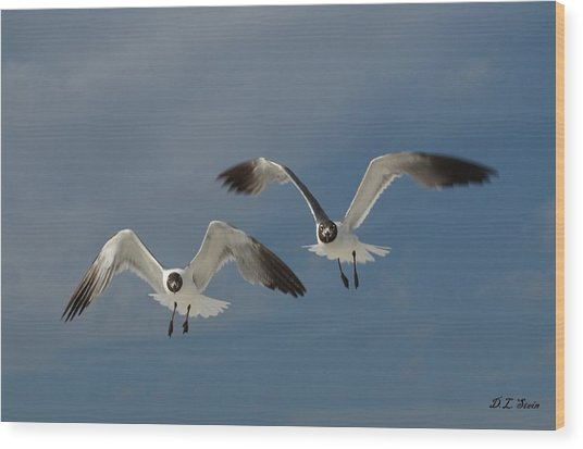 Two Seagulls Wood Print by Dennis Stein