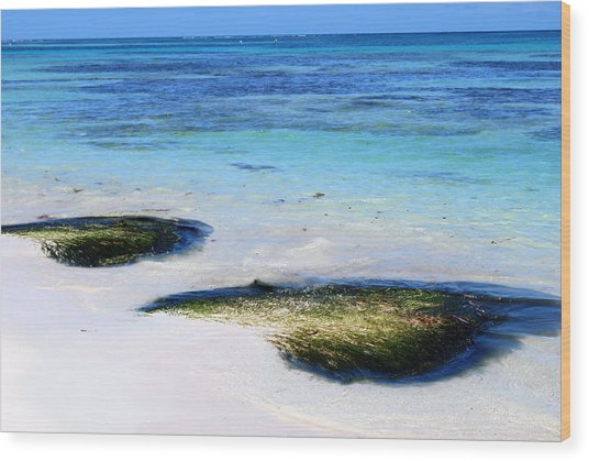 Two Seaweed Mounds On Punta Cana Resort Beach Wood Print