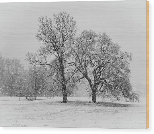 Two Sister Trees Wood Print