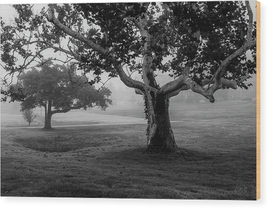 Two Trees Colt State Park Wood Print