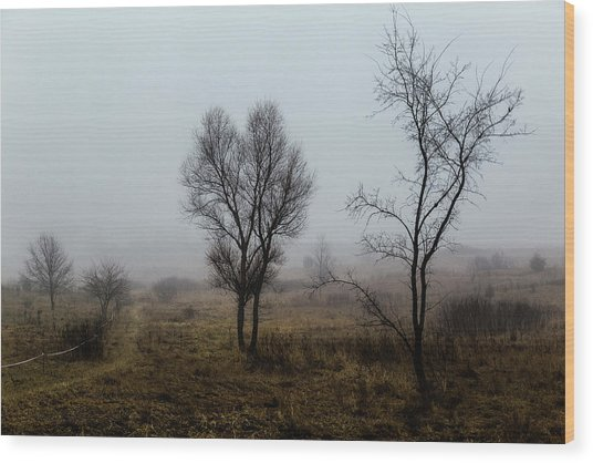 Two Trees In The Fog Wood Print