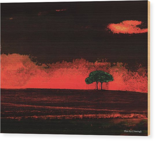 Two Trees In Tuscany Wood Print