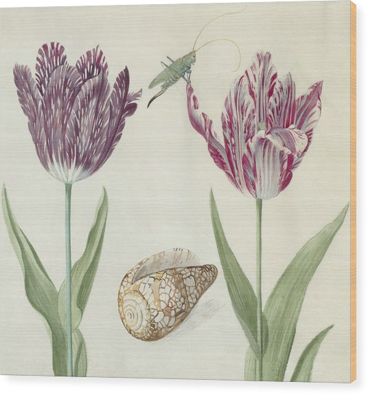 Two Tulips A Shell And A Grasshopper Wood Print