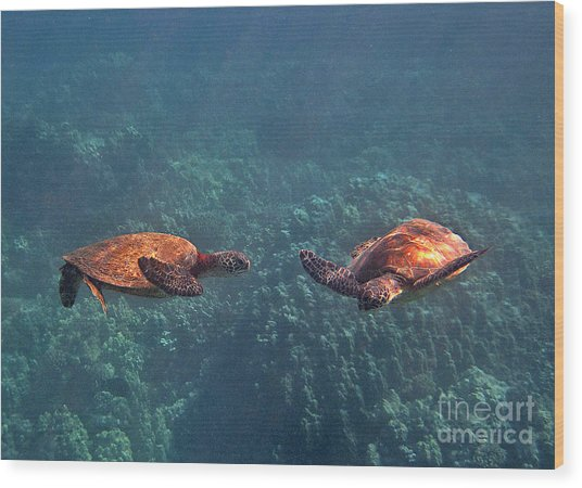 Two Turtle Tango Wood Print