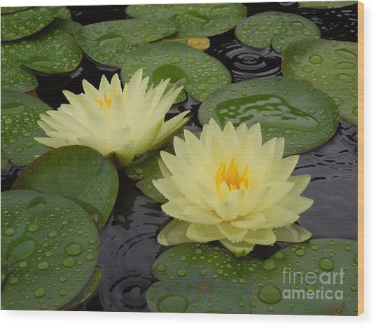 Two Water Lilies In The Rain Wood Print