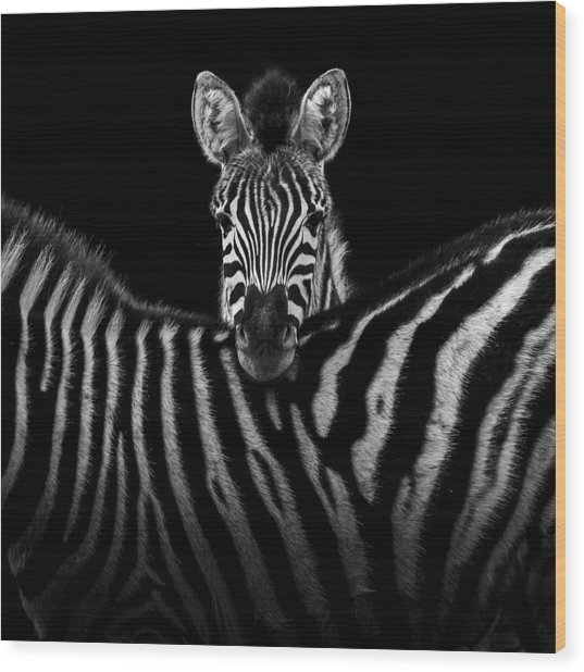Two Zebras In Black And White Wood Print