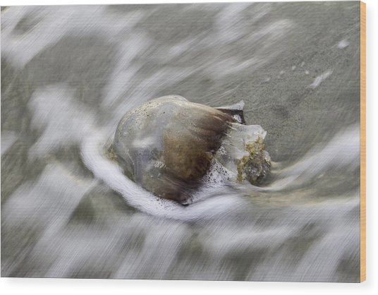 Tybee Isalnd Jellyfish Wood Print